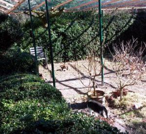 Ein-Dach-ist-auf-dem-Katzengehege-2014-01