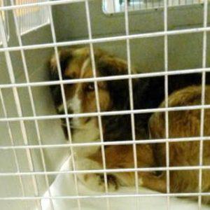 Flug-Tortur-Hunde-Ankunft-aus-Griechenland-02